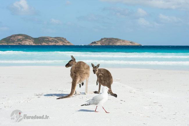 تصاویر جالب و خندهدار از دنیای حیوانات